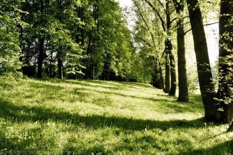 greens 4