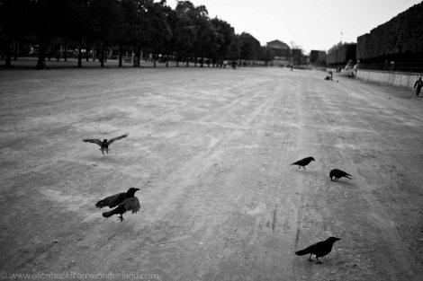 maîtres corbeaux 2