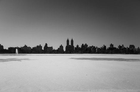 black & white & white